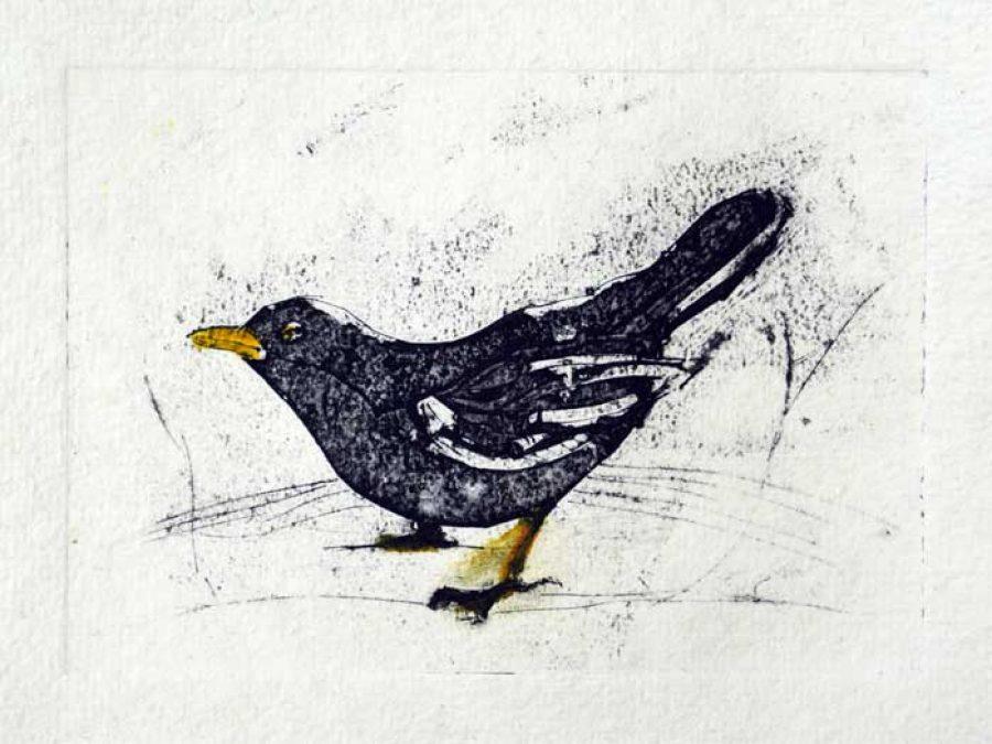 700px-blackbird